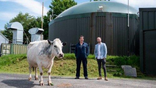 Британский фермер майнит криптовалюту на электричестве из коровьего навоза