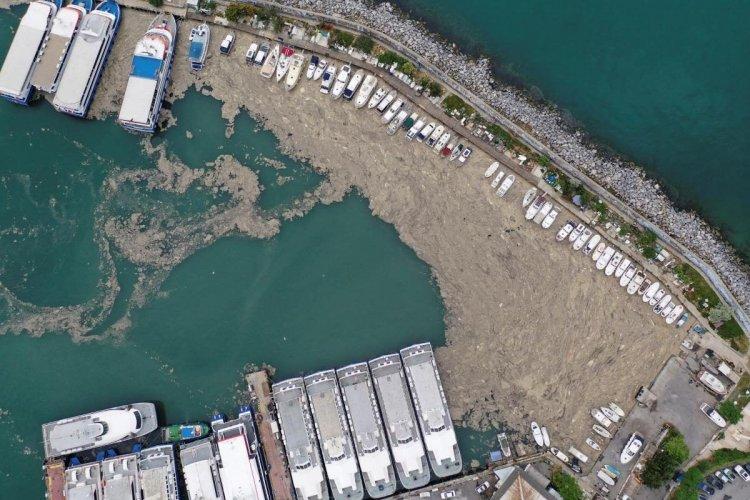 Біля узбережжя Туреччини з'явився морський слиз:  катастрофа загрожує Чорному морю
