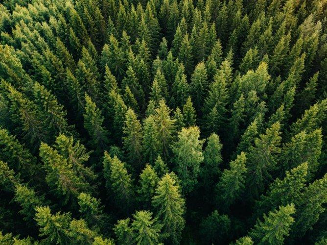 Зеленский пообещал посадить 1 млрд деревьев за 3 года: стало известно, сколько будет стоить идея президента