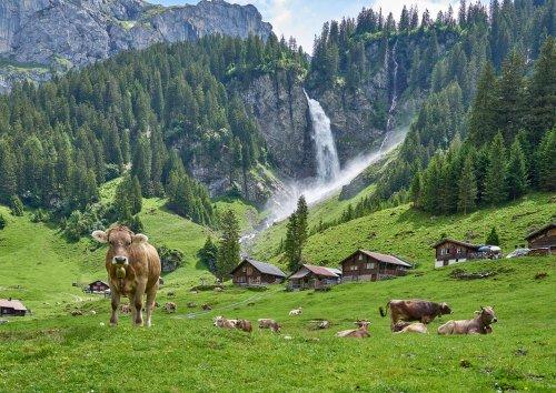На референдумі у Швейцарії не підтримали екоініціативи й закон про захист клімату