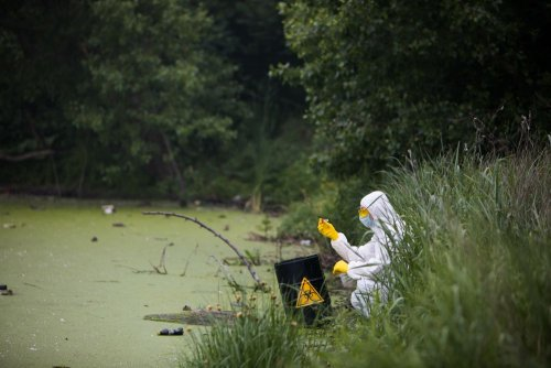 На Сумщине в водоемах обнаружили максимальное превышение опасных веществ