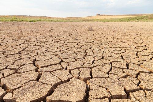 Засуха угрожает не только югу, но и центру Украины, – Лещенко