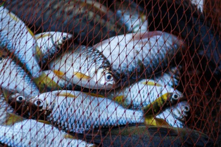 В Украине резко выросли штрафы за незаконный вылов рыбы: сколько заплатят браконьеры
