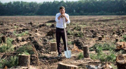Мільярд дерев: у Держлісагентстві визнали, що не подужають план Зеленського