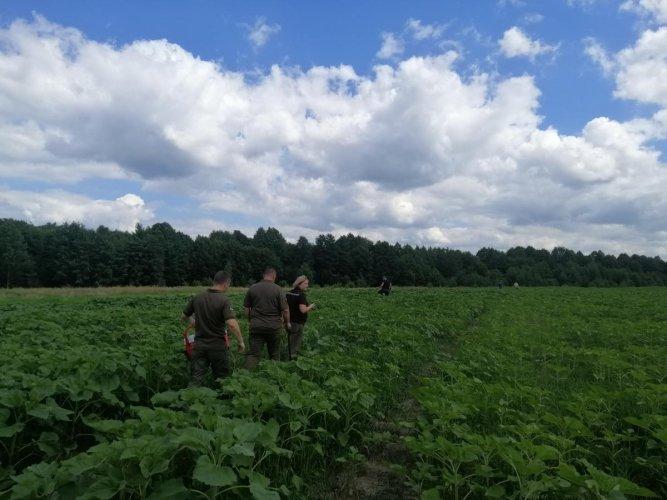 Дозиметр зашкаливает: в Житомирской области на загрязненных радиацией полях выращивают сельхозкультуры