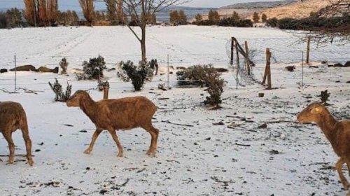 На юге Африки выпал снег и ударили рекордные морозы. Фото