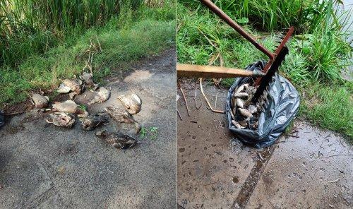Отруїлися ртуттю: зробили розтин риб і птахів, які загинули на ставках у Києві