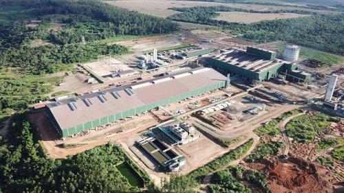 У Бразилії компанія-виробник сталі стала вуглецево-нейтральною завдяки евкаліптам