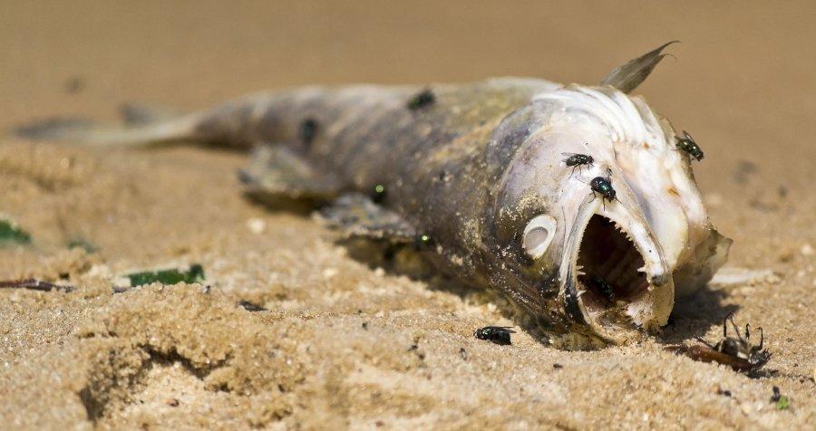 У Запорізькій області масово гине риба. Відео