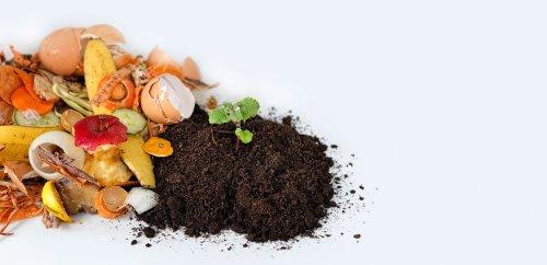 Спростовано міф про безпечність органічного сміття для довкілля
