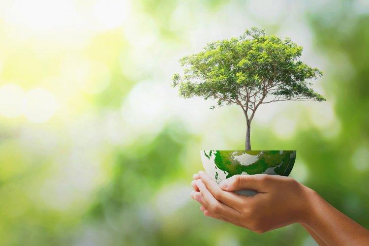Міндовкілля розробило законопроєкт «Про екологічний аудит»: які його основні норми