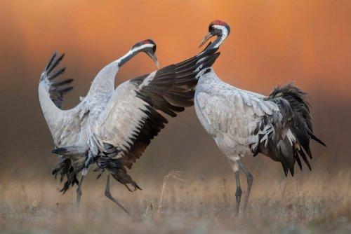 У загибелі 218 червонокнижних птахів в «Асканії-Нова» підозрюють агронома