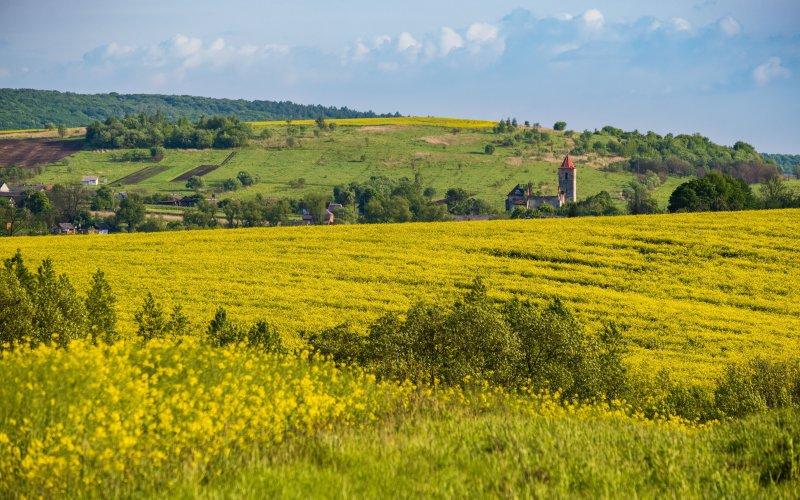 Из-за изменений климата Украина может оказаться в субтропиках
