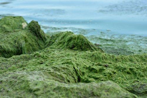 В Одессе позеленели пляжи. Видео