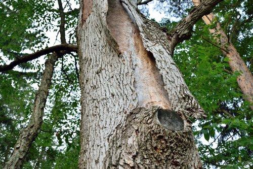 Как в Чернигове экоактивисты спасли деревья от строительной техники. Видео