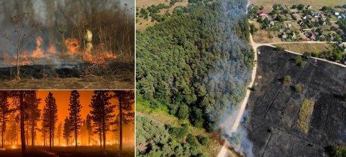 Загроза життю та великі штрафи: українцям розповіли про небезпеку підпалу трави