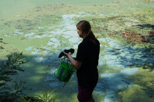 У найчистішій річці Європи українці виявили високі показники фосфатів і нітратів