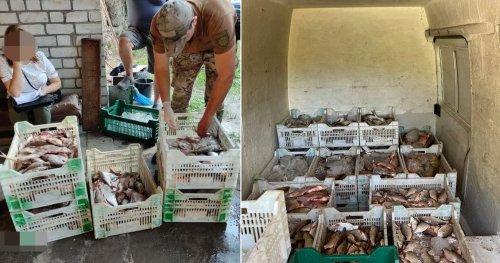 На Черкащині затримали банду браконьєрів, які наловили риби на 2 млн грн. Фото