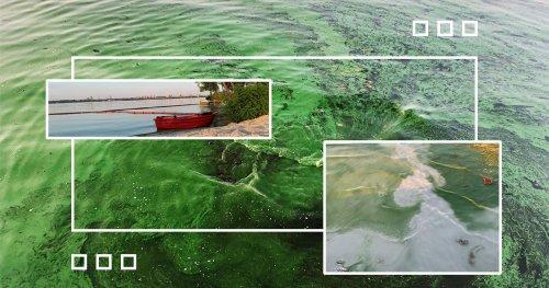 Жара вызвала массовый мор рыбы и раков в Днепропетровской области. Видео