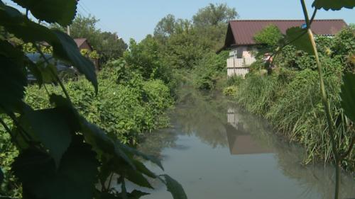 Річка Гнилокіш на межі екокатастрофи: масово гинуть риби, качки та черепахи. Відео