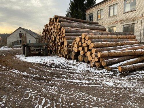 На Житомирщине чиновники погорели на вырубке леса