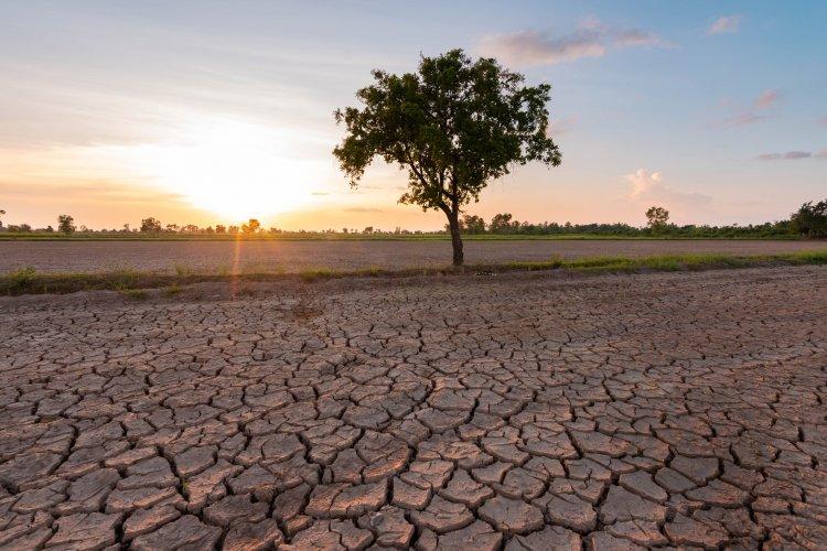 Украинцам рассказали, как изменится климат за 50 лет: зимы без снега, засухи и лесные пожары