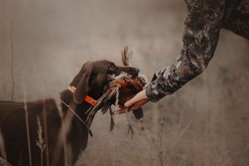 В Украине продолжается сезон охоты: о каких ограничениях стоит знать
