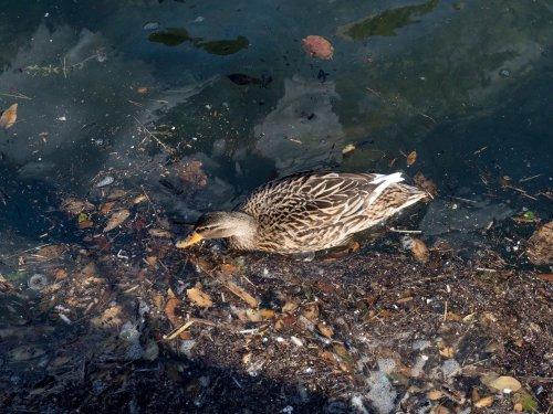 В Харькове во время субботника спасли птицу, которая запуталась в мусоре. Видео