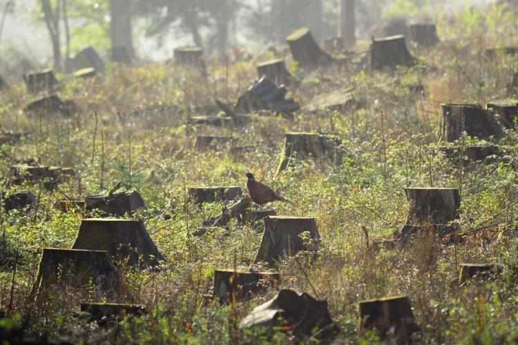 Експерти знайшли огріхи в законопроєкті про кримінальну відповідальність за незаконні рубки лісу