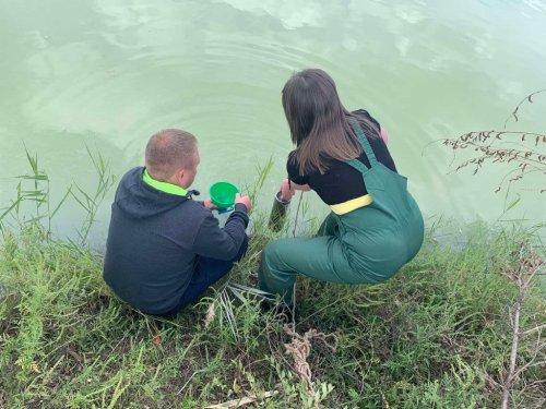 На Дніпропетровщині через каналізаційні стоки вимерли цінні породи риби. Фото