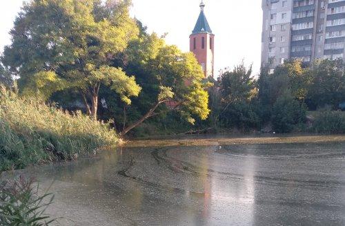 У Дніпрі озеро з черепахами почало перетворюватися на болото. Фото
