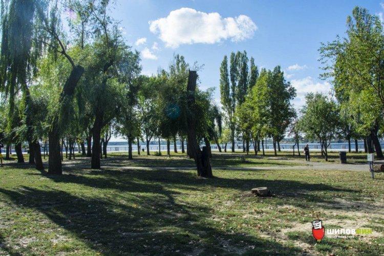 Активисты забили тревогу из-за вырубки деревьев в сквере Николаева