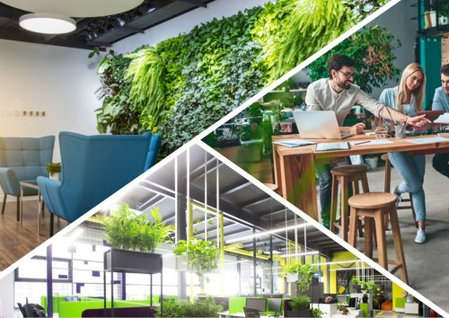 Прогресивний імідж чи «головний біль»: що таке «зелений офіс» та як він працює