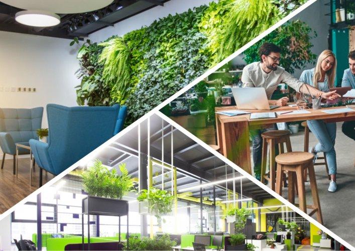 Прогрессивный имидж или «головная боль»: что такое «зеленый офис» и как он работает