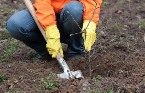Вінничан запрошують долучитися до масштабного еко-проєкту з озеленення