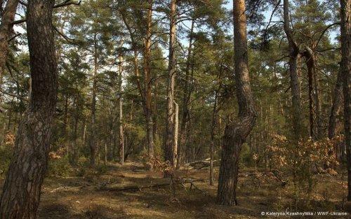 В Київській області офіційно з'явився перший природний ліс площею більше 40 га