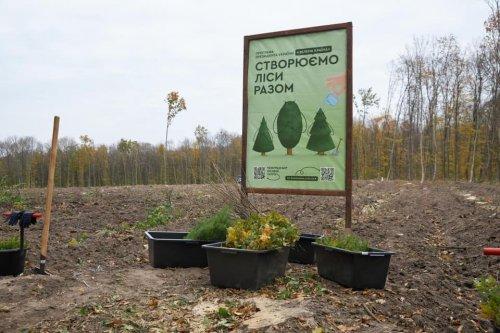 На Житомирщині за день висадили один мільйон дерев