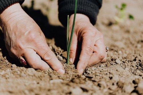 В Луцке впервые в Украине будут перерабатывать ил с очистных сооружений на удобрение